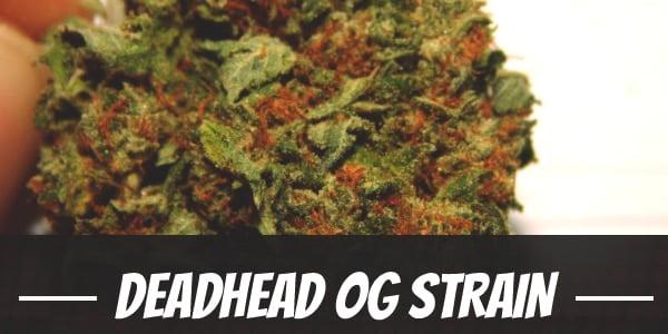 Deadhead OG Strain