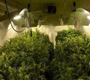 Decreasing humidity in marijuana grow room