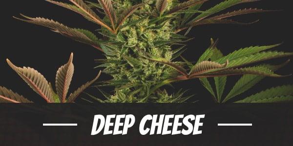 Deep Cheese