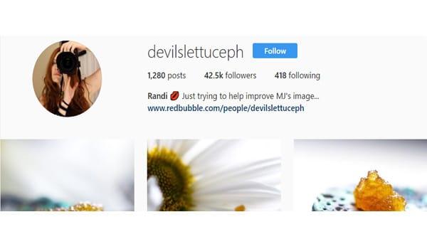 Devil Lettuce Photography