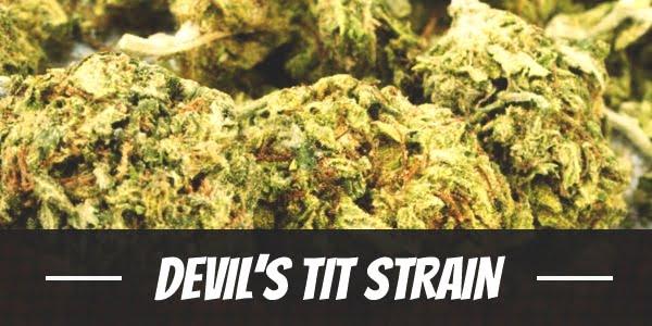 Devil's Tit Strain