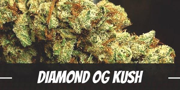 Diamond OG Kush