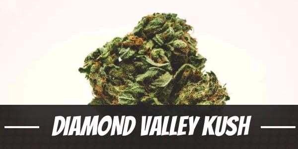 Diamond Valley Kush