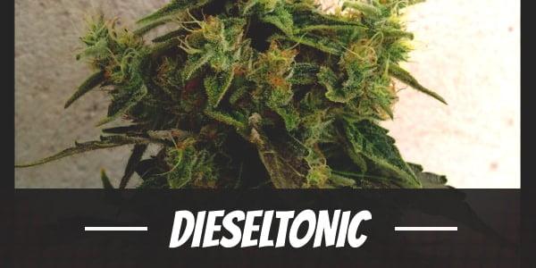 Dieseltonic