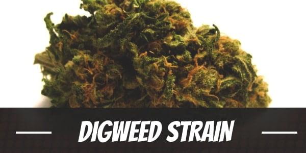 Digweed Strain
