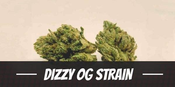Dizzy OG Strain