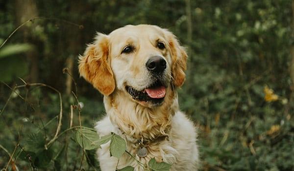 Dogs CBD Dosage