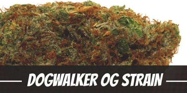 Dogwalker OG Strain