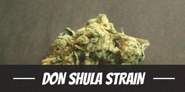 Don Shula Strain