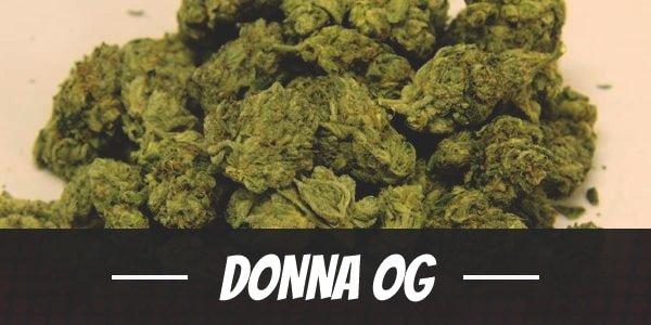 Donna OG