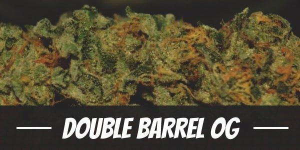 Double Barrel OG