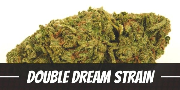 Double Dream Strain