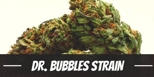 Dr. Bubbles Strain