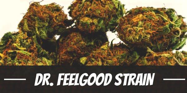 Dr. Feelgood Strain