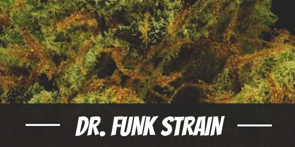 Dr. Funk Strain