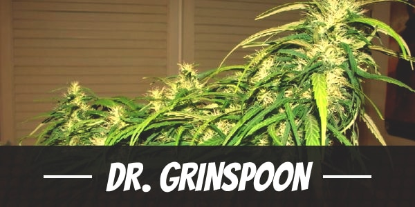 Dr. Grinspoon