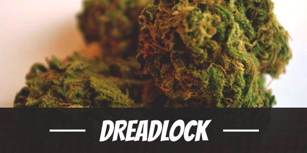Dreadlock