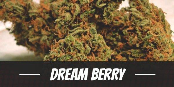 Dream Berry