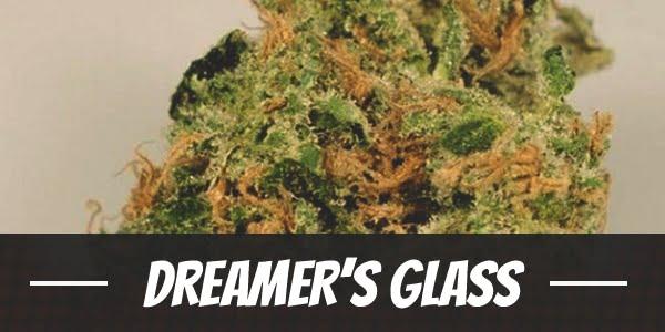 Dreamer's Glass