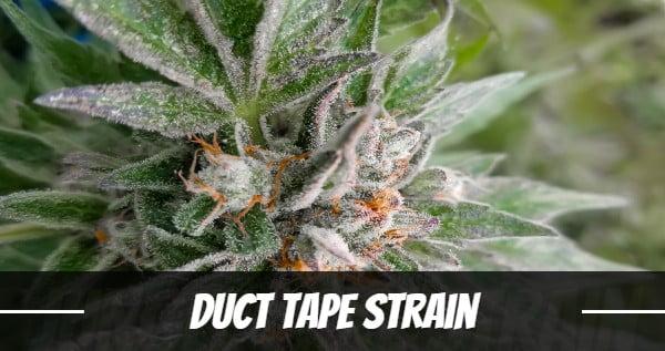 Duct Tape Strain