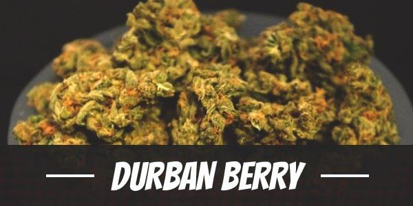 Durban Berry