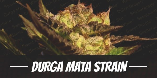 Durga Mata Strain