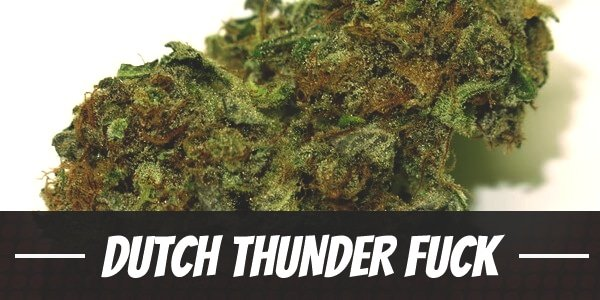 Dutch Thunder Fuck