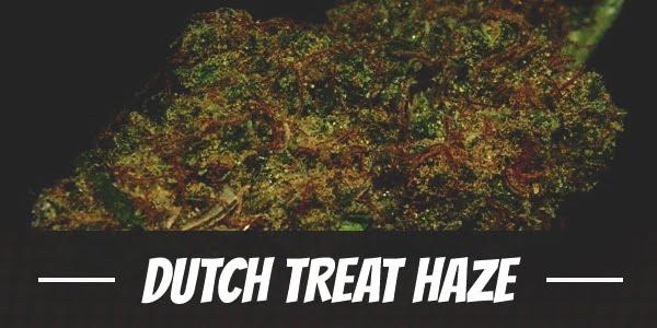 Dutch Treat Haze