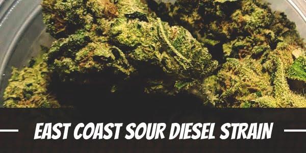 East Coast Sour Diesel Strain