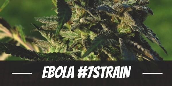 Ebola #7