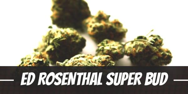 Ed Rosenthal Super Bud