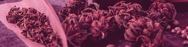 Forbidden Fruit Weed