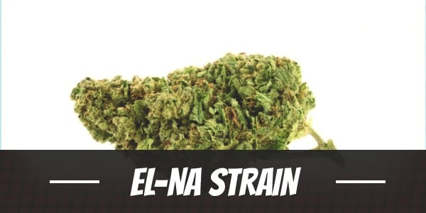 El-Na Strain