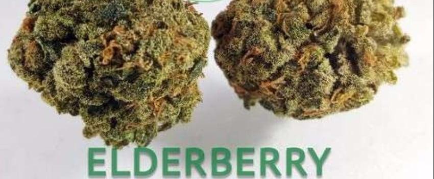 Elderberry Effects