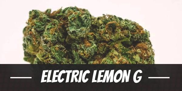 Electric Lemon G