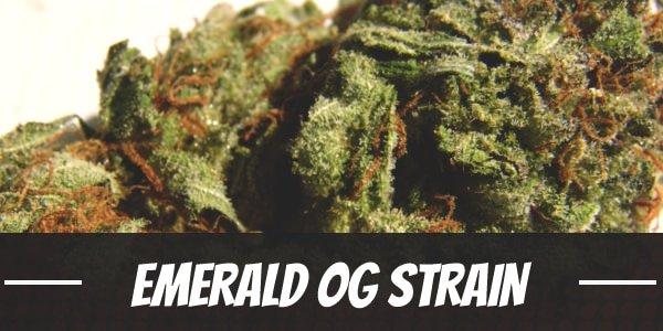 Emerald OG Strain