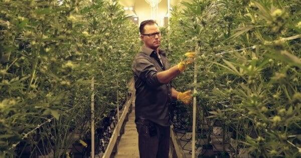 Entry level marijuana jobs in Maine