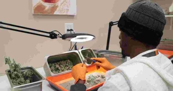 Entry level marijuana jobs in Nevada