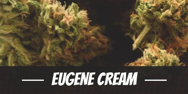 Eugene Cream