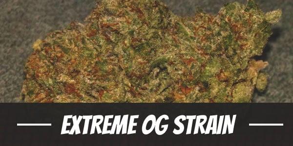 Extreme OG Strain