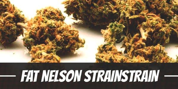 Fat Nelson Strain