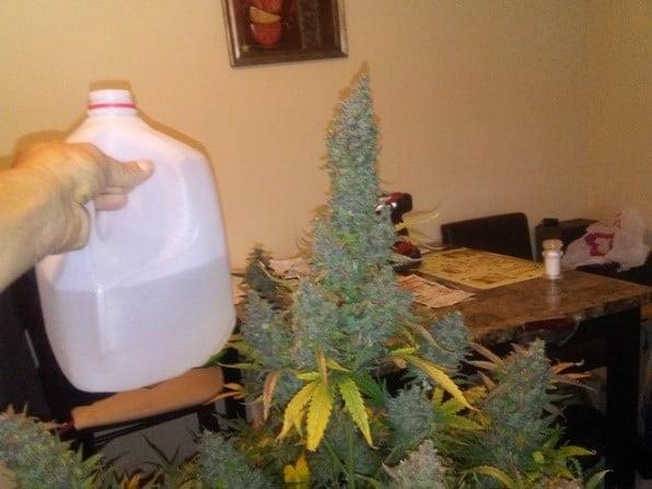 2-liter jug