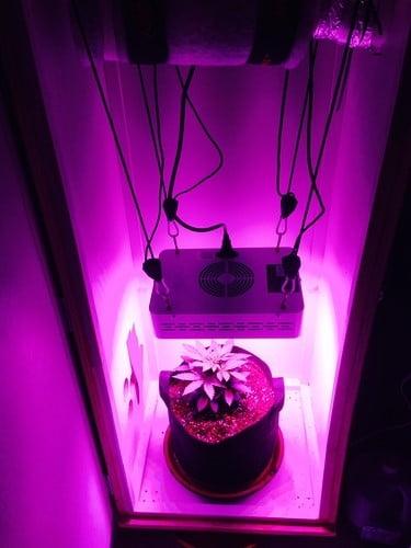 homemade grow box