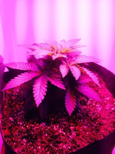 2 days after flowering