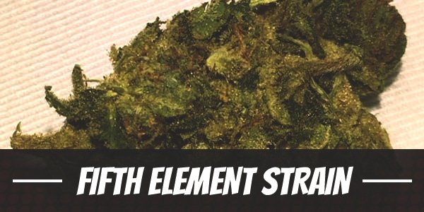 Fifth Element Strain