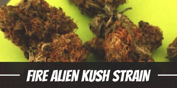 Fire Alien Kush Strain