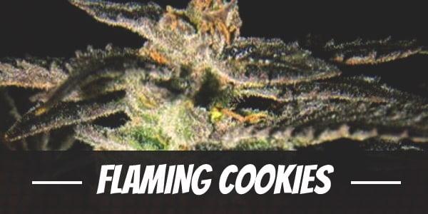 Flaming Cookies