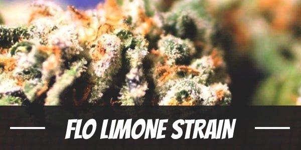 Flo Limone Strain