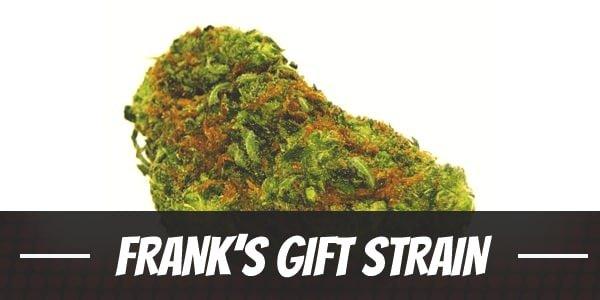 Frank's Gift Strain