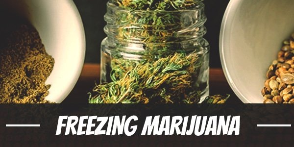 Freezing Marijuana
